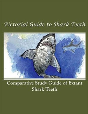 Pictorial Guide to Shark Teeth